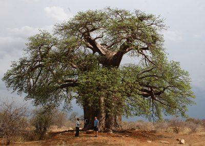 Botswana, 2008